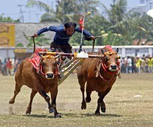 Lomba karapan sapi